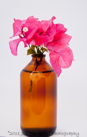 bougainvillea in brown vase