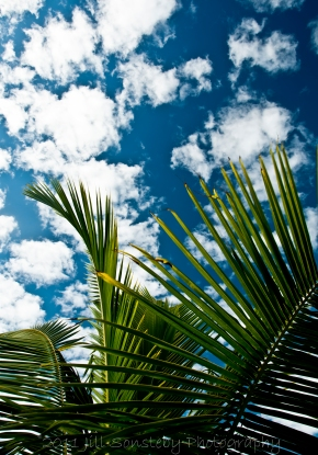blue sky, clouds and palm tree