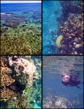 A glimpse into the underwater world of the Caribbean in Utila, Honduras